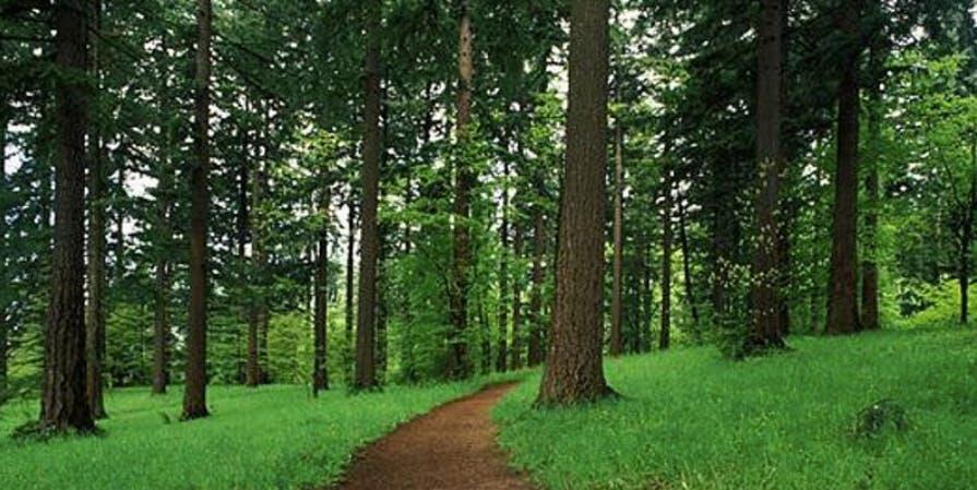 Mindtravel SilentHike in Portland in Forest Park
